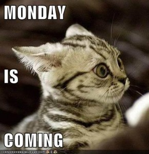 monday is coming cat photo