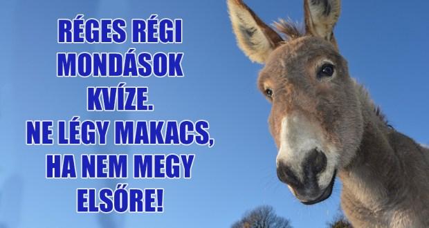 Értesz régi magyarul? Vagy állsz, mint Bálám szamara? Régi mondások kvíze!