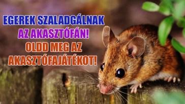 egeres akasztófajáték