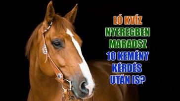 Ló kvíz