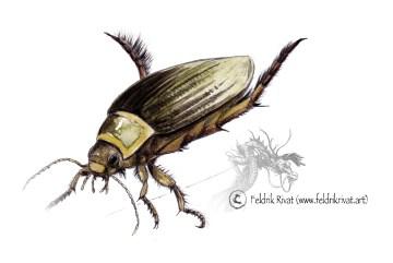 Insectes et autres arachnides