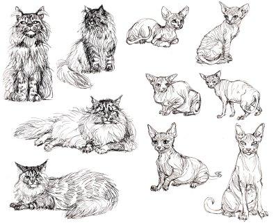 Cat_studies-Felicia_Cano
