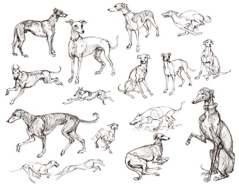 greyhounds-Felicia_Cano