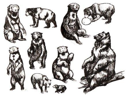 sun-bear-sketches-Felicia_Cano
