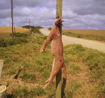 Caracal Cat Documentary Needs Help