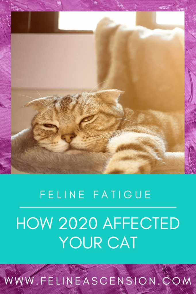 Felines and the Fatigue of 2020