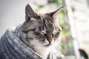 Cats and Depression
