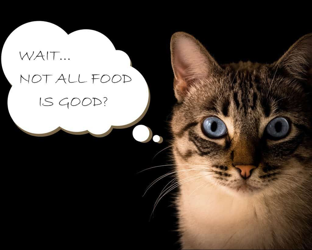 Cat wandering: are not all cat foods good?