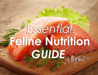 Essential Feline Nutrition Guide