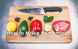 Homemade Cat Food