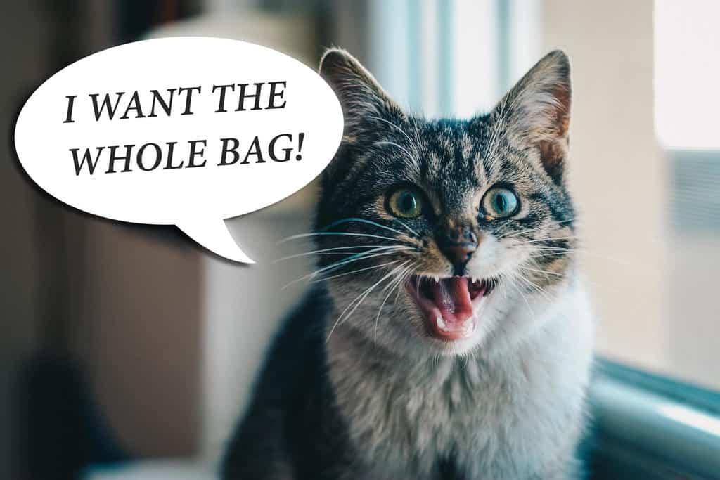nulo cat food reviews