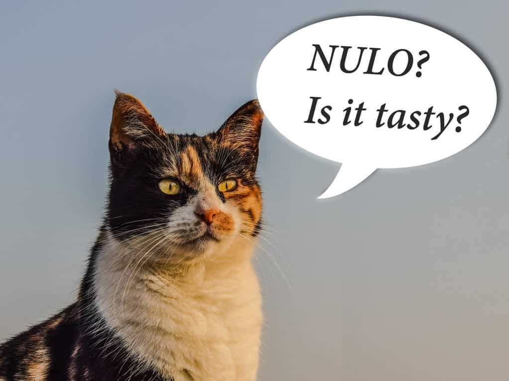 a cat with a cloud above her head in which it is written ''Nulo? Is it tasty?''