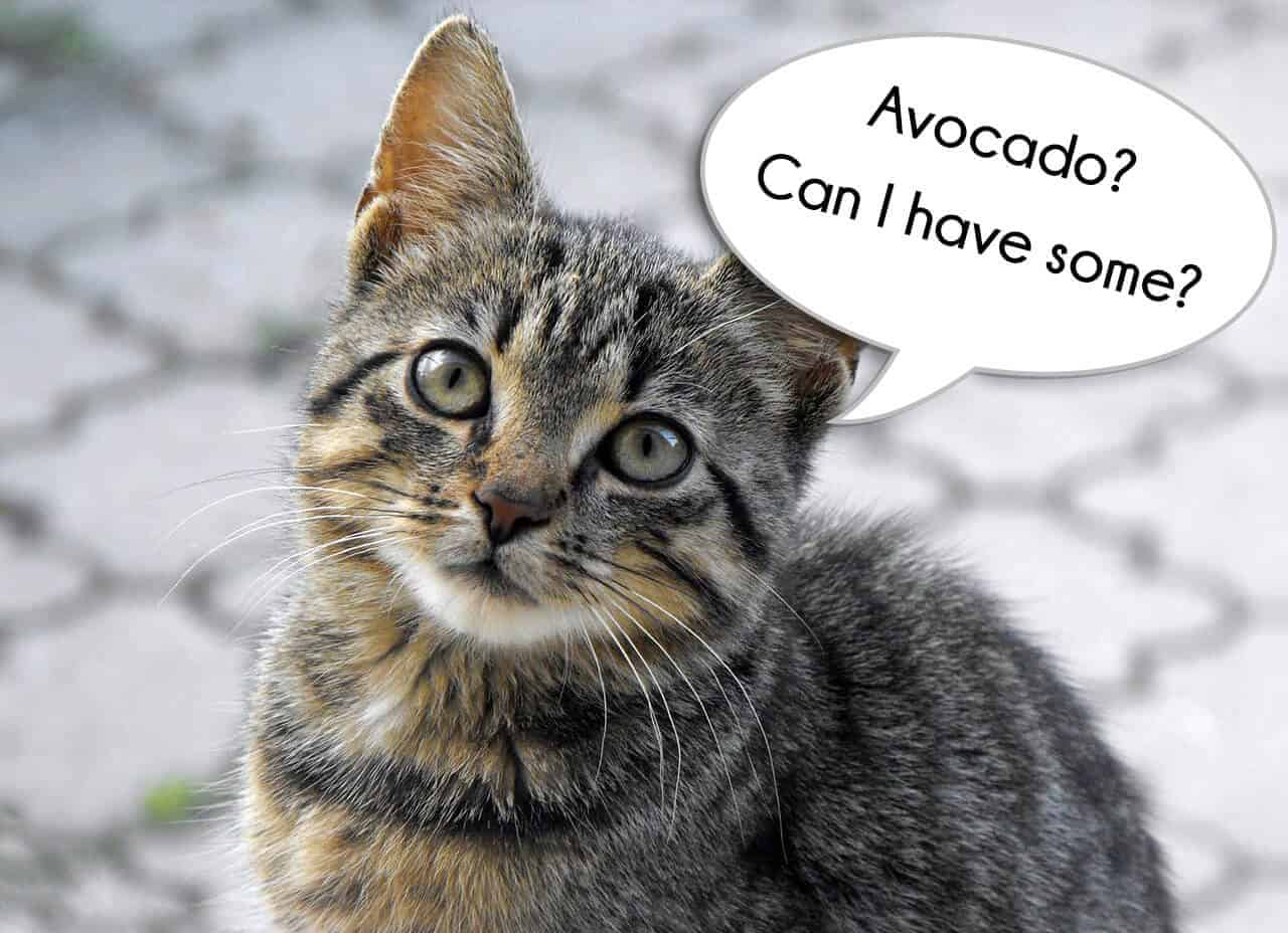 Can Cats Eat Avocado? Benefits And Precautions Revealed! 4