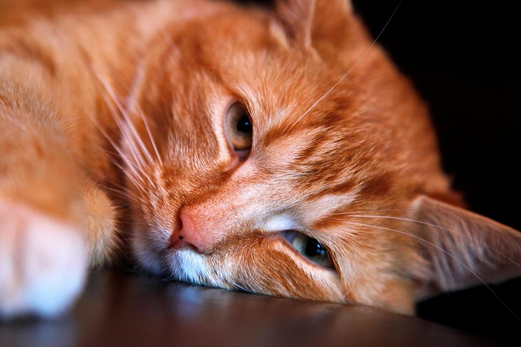 Home Remedies for Tapeworm in Cats - A More Natural Approach 2