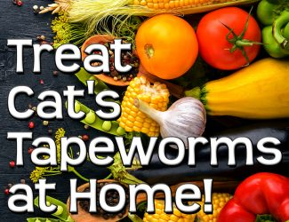 Home Remedies for Tapeworm in Cats – A More Natural Approach