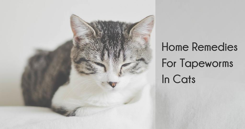 Home Remedies for Tapeworm in Cats