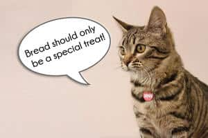 image of a talking kitty