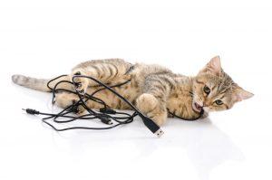 cat chew cords