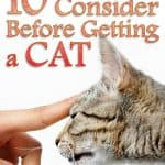 Top 10 Things to Consider Before Getting a Cat