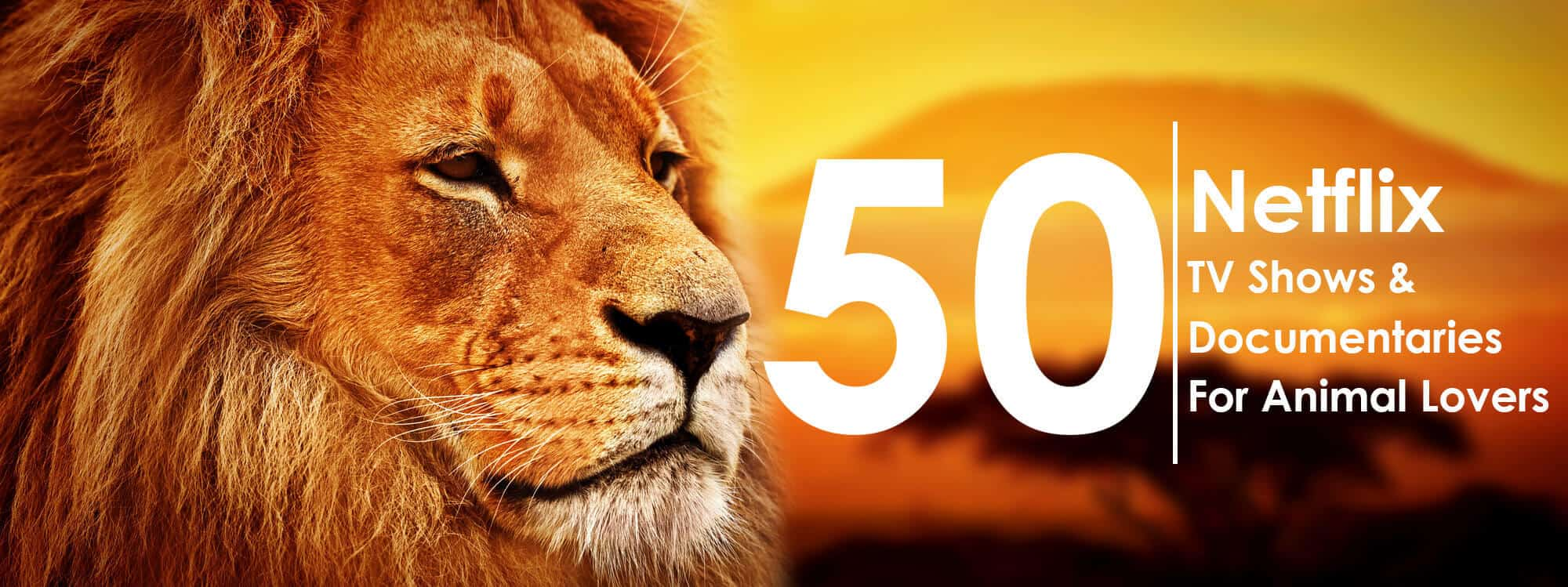 a poster where a lion looks at an inscription ''50 Netflix TV shows&documentaries for animal lovers''