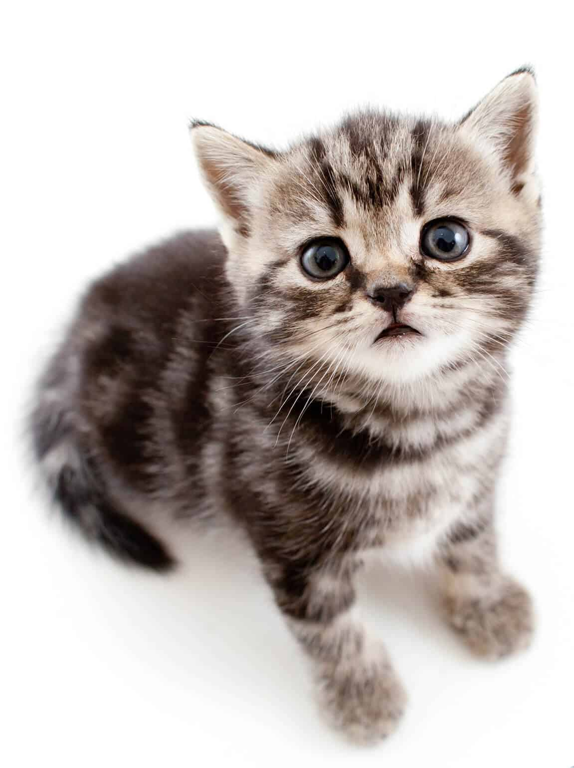 Top 500 Most Popular Female Cat Names 10