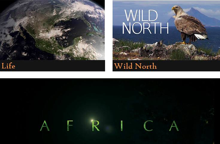 a poster divided into three pictures showing the names of the animal documentaries (Life, Wild north, AFRICA)