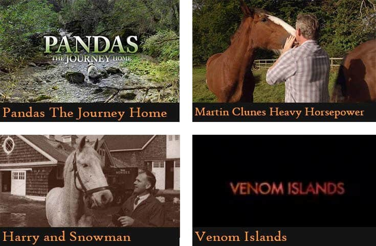 a poster divided into four pictures showing the names of the animal documentaries (Pandas the journey home, Martin Clunes heavy horsepower, Harry and Snowman, Venom Islands)