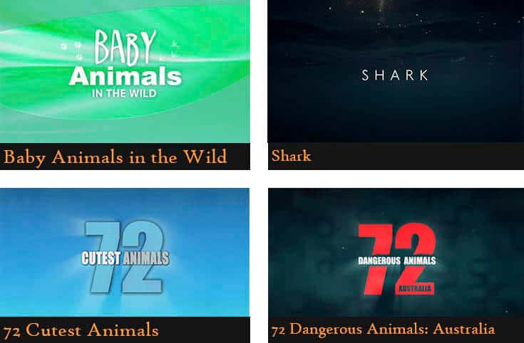 a poster divided into four pictures showing the names of the animal documentaries (Baby animals in the wild, Shark, 72 cutest animals, 72 dangerous animals: Australia)
