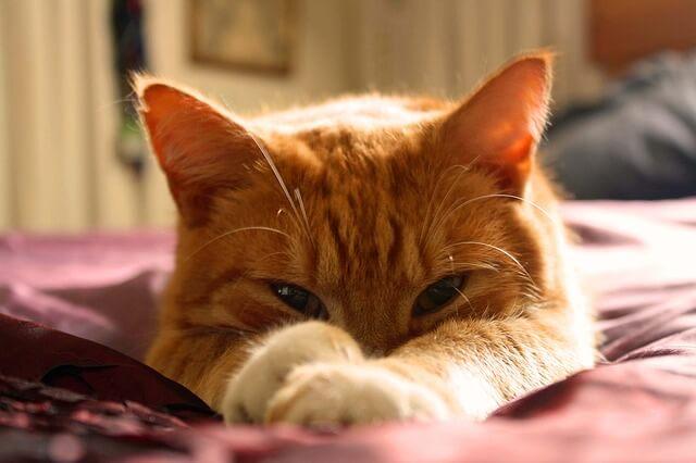248 Orange Cat Names For All Ginger Felines