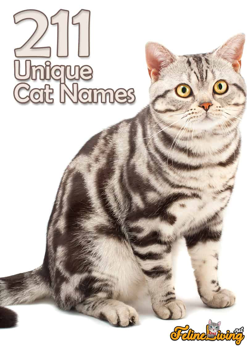 Unique Cat Names 200 Best Exotic Names