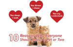 10 Wonderful Reasons Why Everyone Should Adopt An Animal