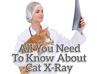 Cat X Ray: Everything You Need To Know