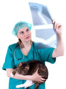 image of a veterinarian looking at the x-ray