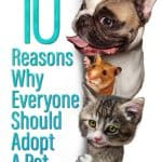 Ten Reasons Why Everyone Should Adopt A Pet
