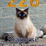 226 Siamese Cat Names - Only For Royalty Felines