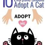 Ten Reasons Why Everyone Should Adopt A Cat