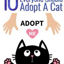 Reasons Why Everyone Should Adopt A Cat