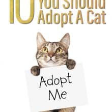 Reasons Why You Should Adopt a Cat