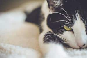 image of a black and white cat laying on the bed