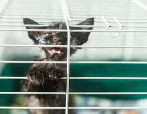 image of an ill cat in a cage