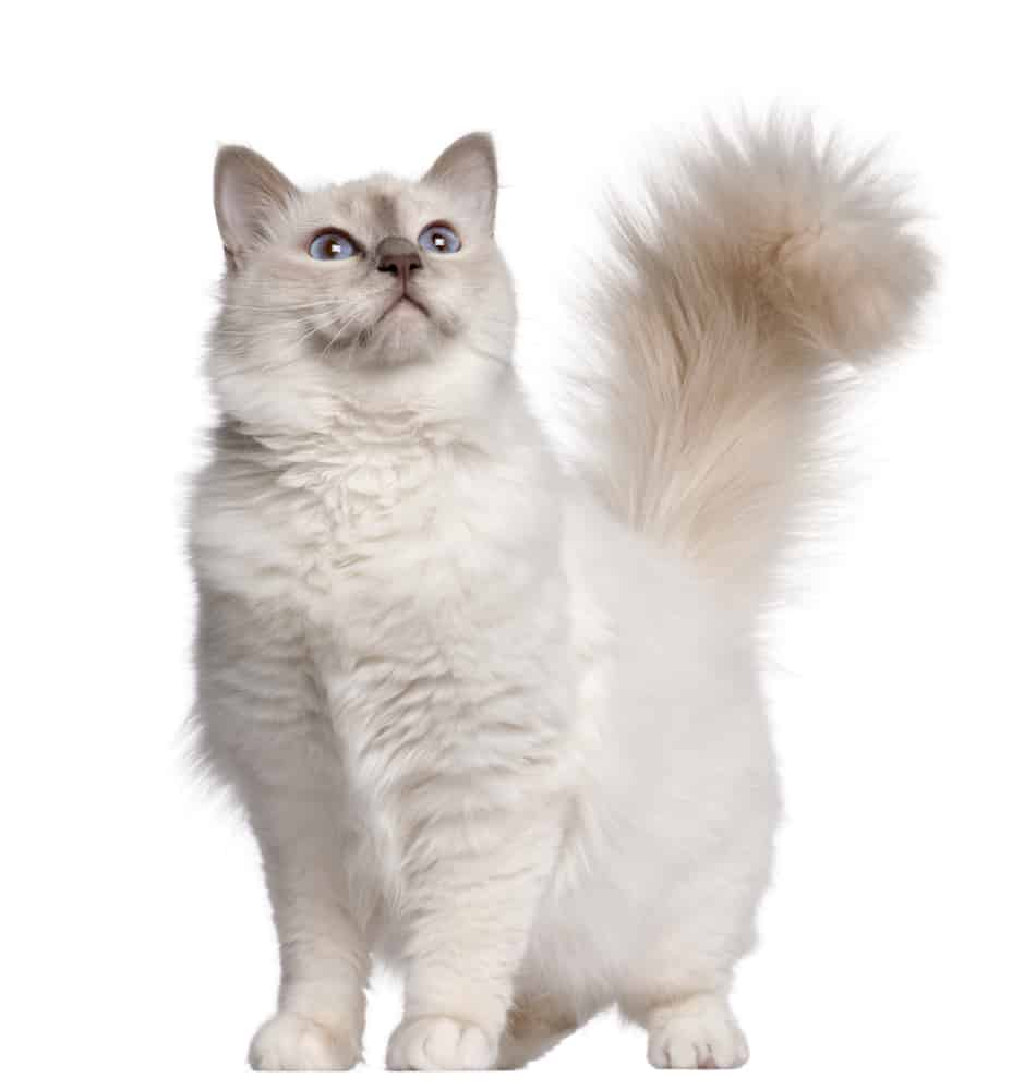 209 White Cat Names For Your Fur-bulous Snowball 1
