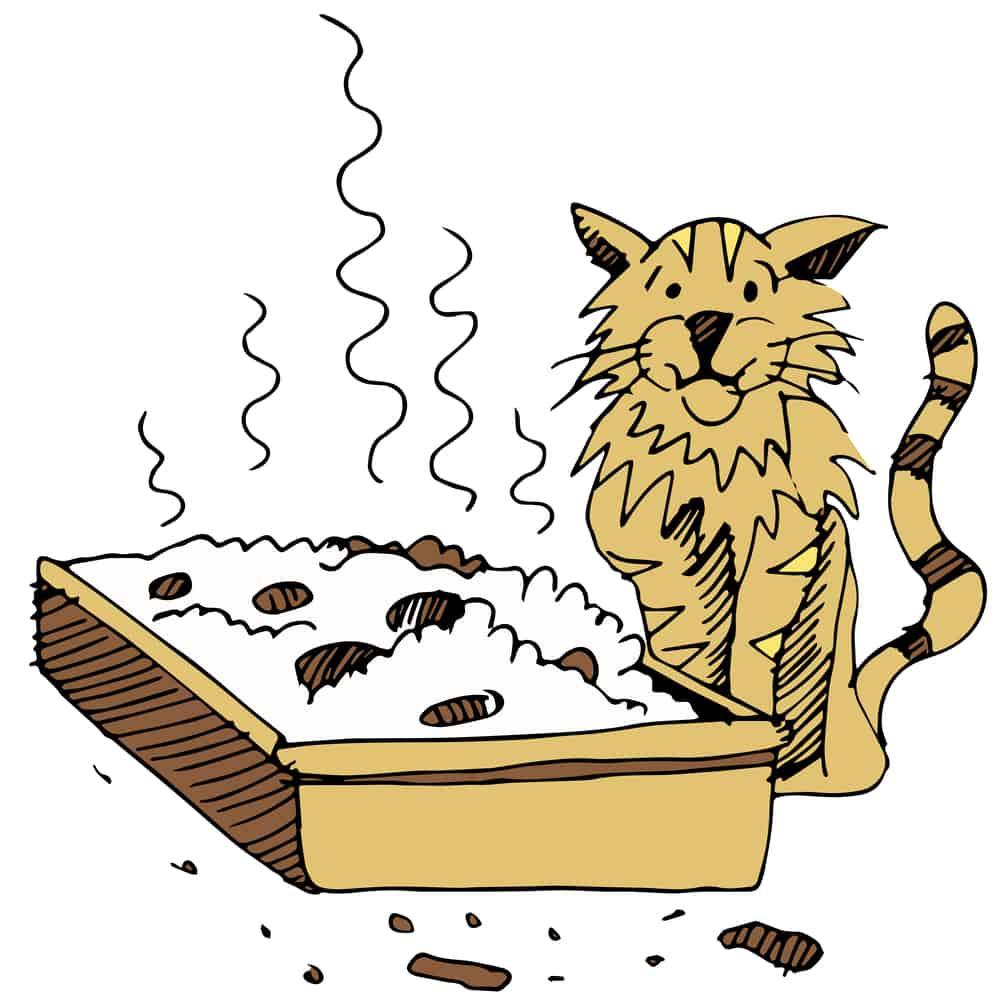 Get Rid of Cat Litter