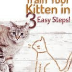 How to Litter Box Train Your Kitten In 3 Steps!