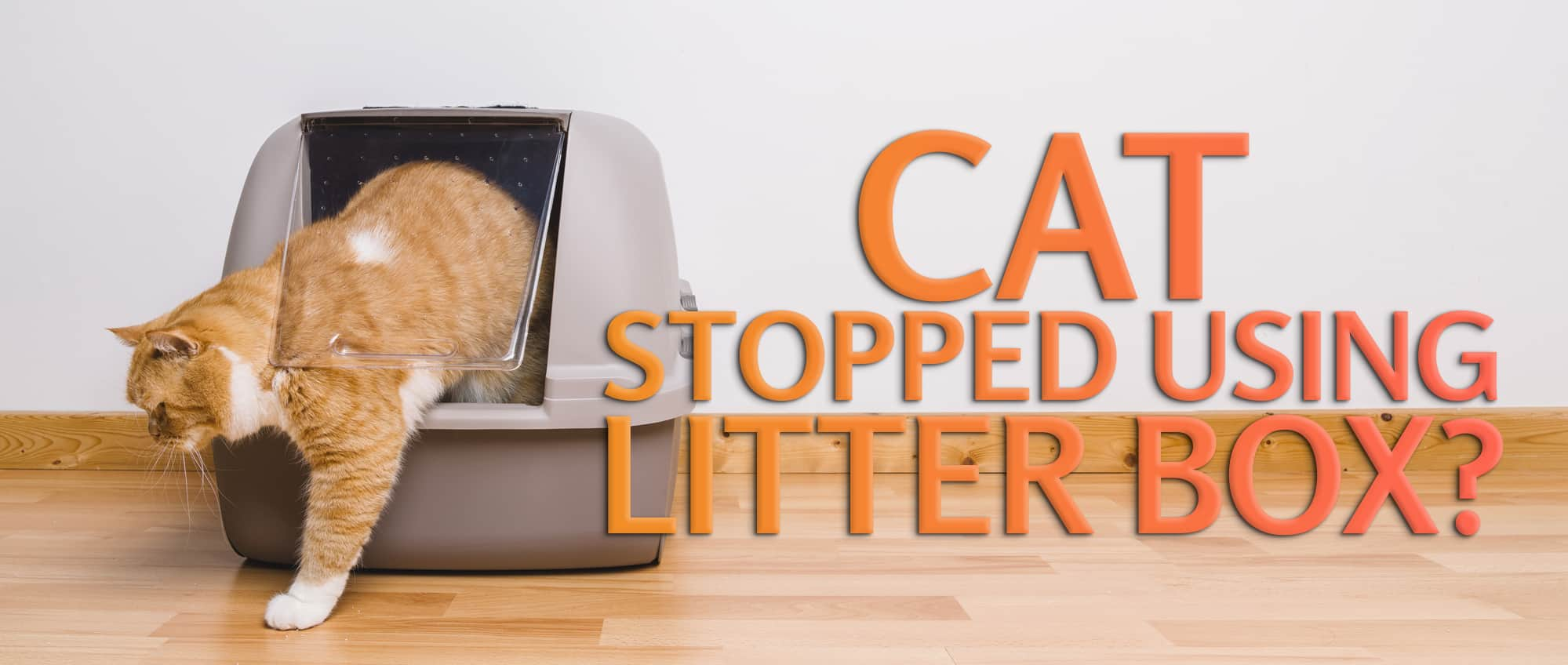 Cat Stopped Using Litter Box
