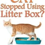 10 Reasons Why Your Cat Stopped Using the Litter Box