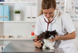 Cat at a veterinary exam