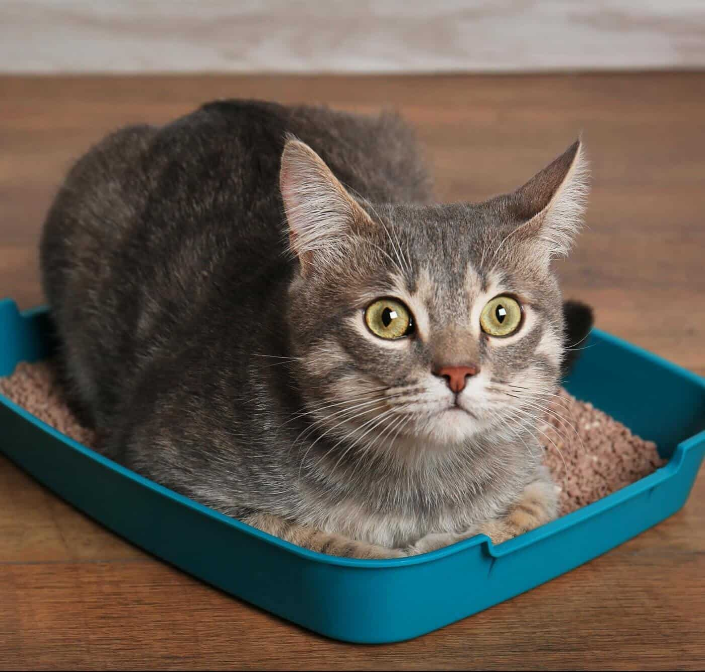 Your Cat Sleeping In Litter Box? Here Are 5 Reasons Why 1