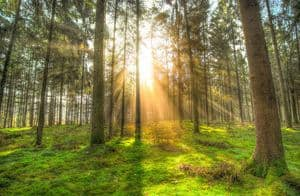 image of a beautiful forest