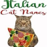 231 Italian Cat Names For Your Roman Kitty