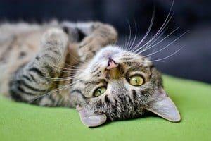 image of a cute kitten